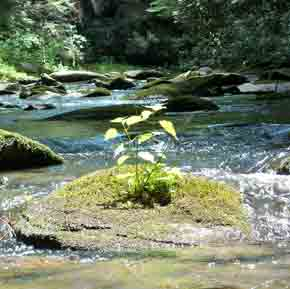 Jacks River - Cohutta Wilderness